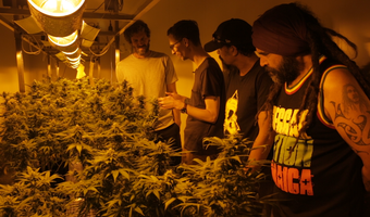 Growing Dope